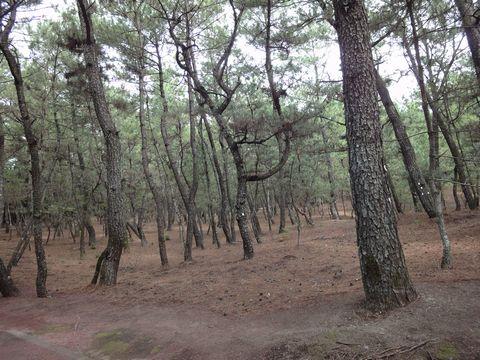 宮崎県 心霊スポット シーガイア近くの松林
