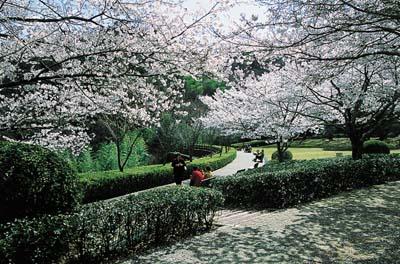 徳島県 心霊スポット 西部公園