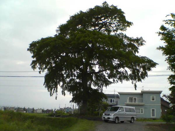 北海道 心霊スポット 恵庭の御神木